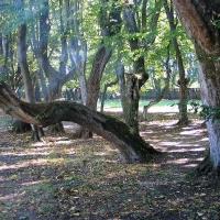 Siemczyno cuda natury koło pałacu